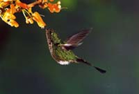 hummingbird001.jpg